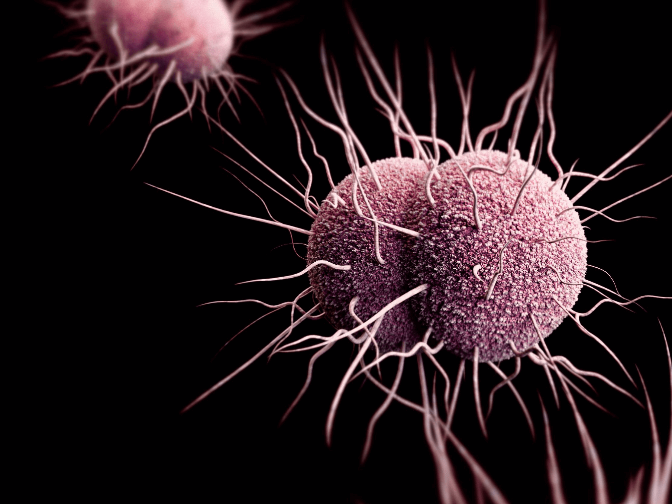 Gonorrhoea antibiotic-resistance on the rise